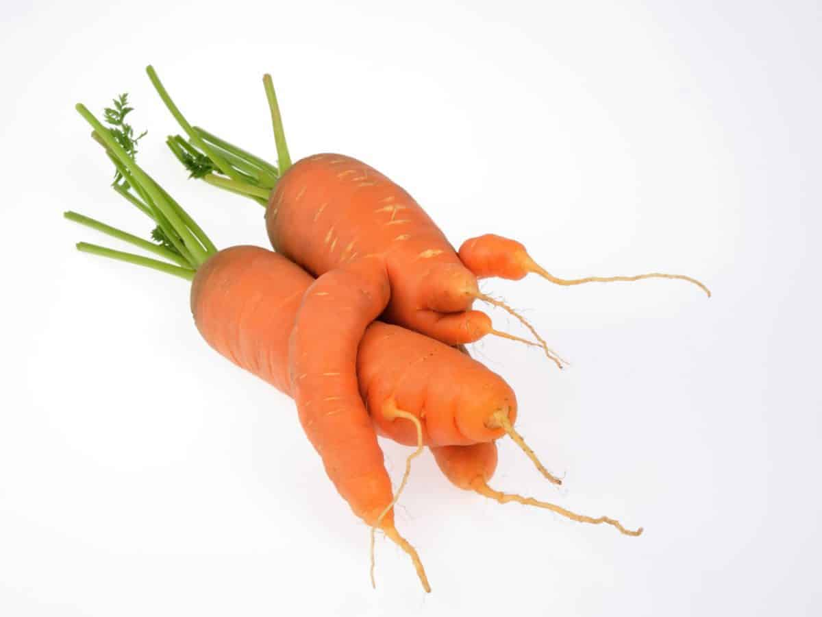 misfit, fruits and veggies, food waste, ugly fruits an veggies