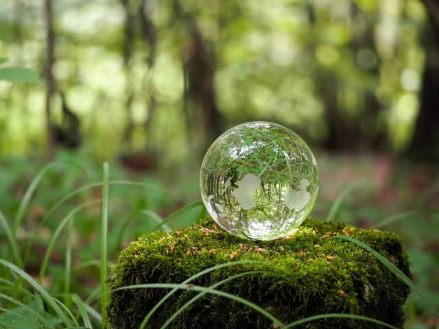 Earth Day Projects, Mindful Gardening,