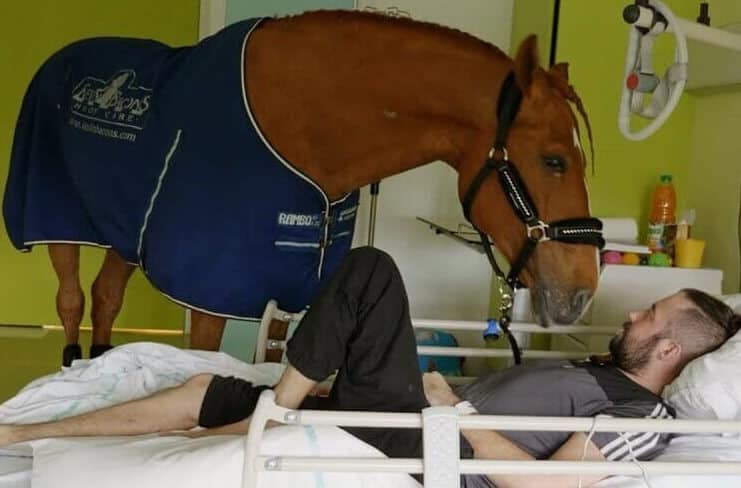Doctor Peyo, Therapy Horse